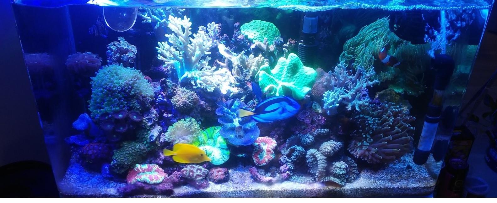 サンゴ過密水槽