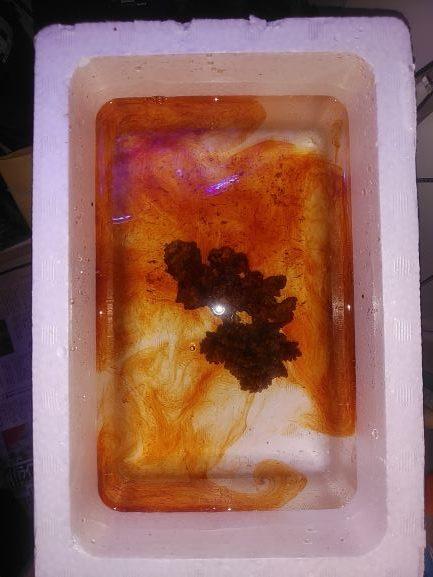 サンゴ薬浴